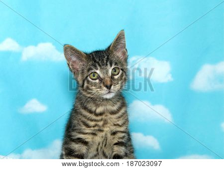 Portrait of one small tabby kitten sitting up looking slightly to viewers right. Blue background sky with clouds.