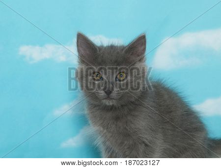 Portrait of one small fluffy gray kitten looking at viewer. Blue background sky with clouds.