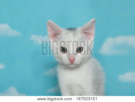 Portrait of one white kitten with black spot on top of head looking at viewer blue background sky with clouds. Copy space