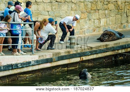 PUNTA DEL ESTE - URUGUAY, MARCH 3, 2017: Tourist has his photo taken by posing beside a sea lion at the fishing dock of the popular resort city on the Atlantic coast.