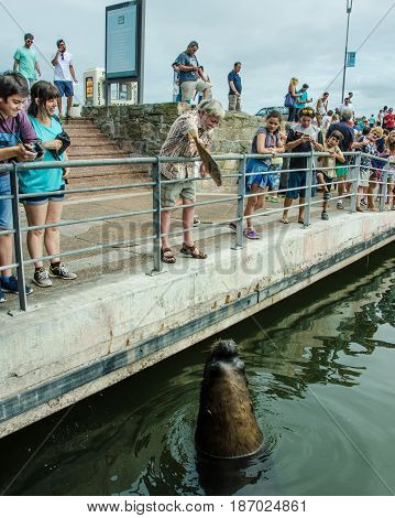 PUNTA DEL ESTE - URUGUAY, MARCH 3, 2017: Tourist throws a fish to a waiting sea lion at the fishing dock of the popular resort city on the Atlantic coast.