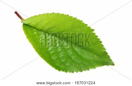 Sheet cherry closeup isolated on white background.