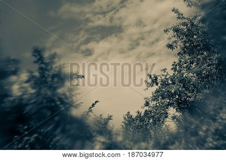 Dark sky with tree branches with special blurry effect