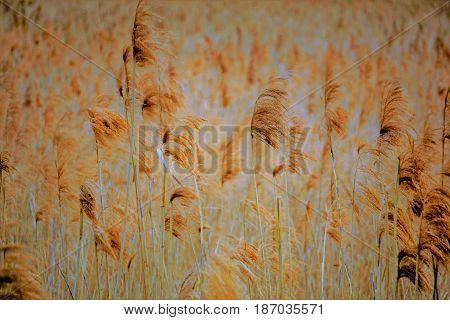 Vintage stile photo of a bog cotton field