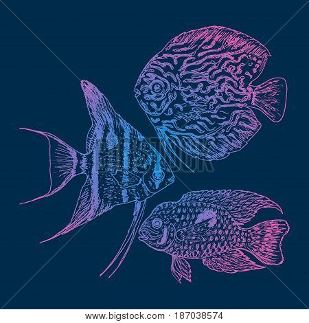 Graphic aquarium fishes set with discus andgelfish and akara in hand drawn style isolated vector illustration
