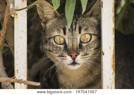 The cat watches from behind the fence