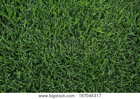 Green Lawn Background Green grass background texture