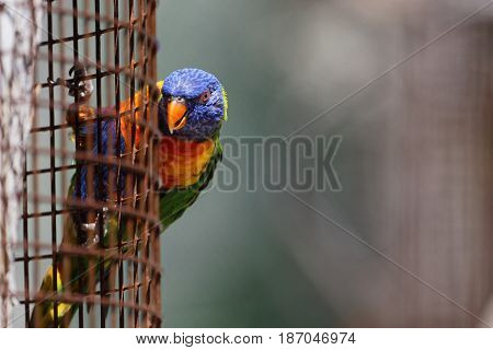 A parrot has gone outside its cage