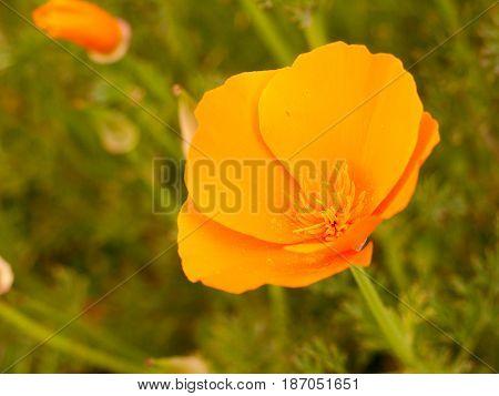 Orange Flower Head Open Up In Sunlight In Late Summer Afternoon