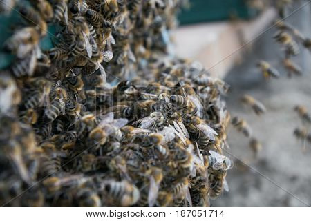 Beehive, Bee flying to hive. The bees enter the hive. Bees at beehive.