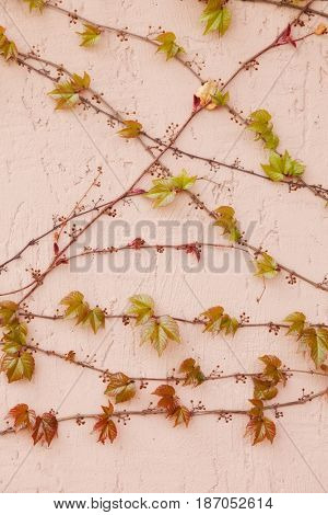 branch of decorative grapes on wall