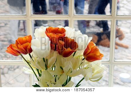 Beautiful White And Orange Flowers In A Window