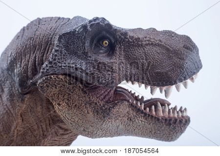 Macro Head Shot Of Brown Dinosaur Tyrannosaurus Rex With Open Mouth In Attack Position - White Backg