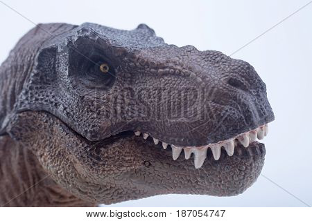 Macro Head Shot Of Brown Dinosaur Tyrannosaurus Rex With Close Mouth In Attack Position - White Back