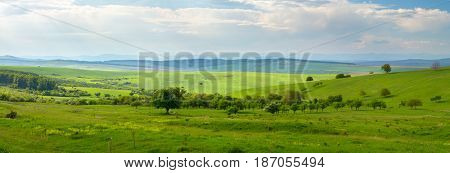 green meadow at summer