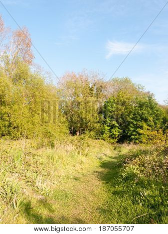 Lush Green Verdure And Foliage Outside In Spring Walking Meadow For Peaceful Being And Natural Conne