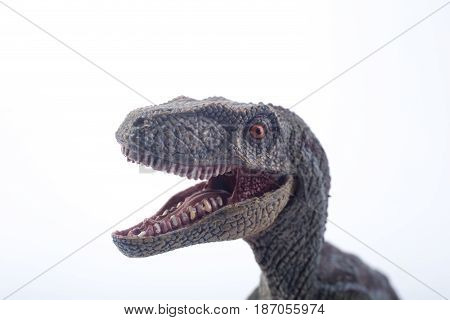 Macro Head Shot Of A Great Velociraptor Dinosaurs Toy With Open Mouth In Attack Position On White Ba