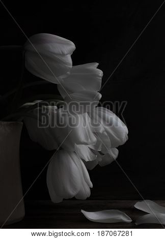 Romantic black and white tulips in a vase