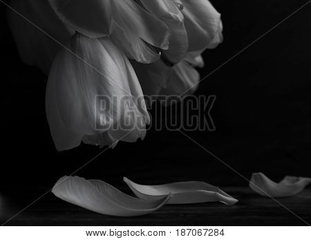 Close up Romantic white tulips in a yellow vase