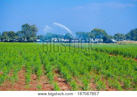 farm products Converter plant cultivation commercial kitchen garden.