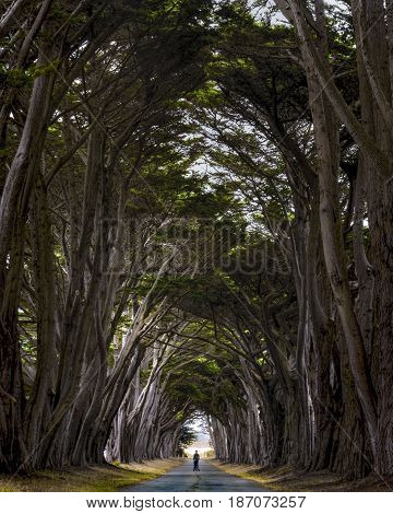 A man standing on a segue in the middle of the tree tunnel in the Point Reyes area
