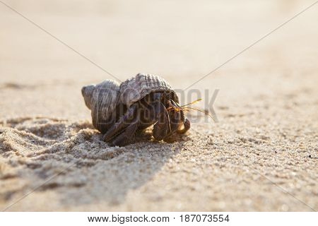 Small hermit crab on the tropical island sand. Copy spaceclose up; Hermit crab on tropical beach