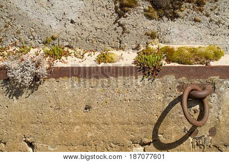 Concrete wall with moss close-ups and a metal ring