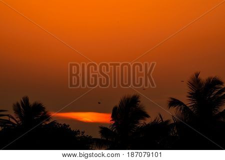 sunset behind the trees and orange color spread over the sky