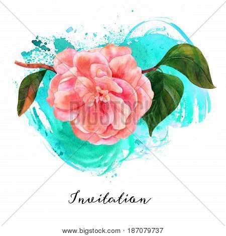 A watercolor drawing of a tender pink camellia flower in bloom, on a branch with green leaves, on a teal brush stroke texture, a decorative element for a greeting card or a wedding invitation
