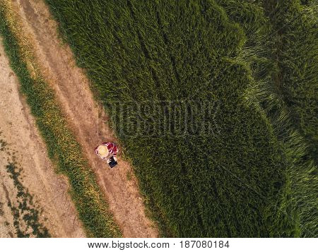 Female farmer using digital tablet computer in green wheat field drone point of view