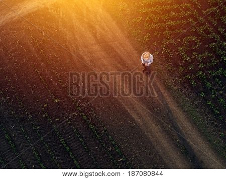 Farmer using drone in sugar beet crop field concept of modern smart farming by using electronics technology and mobile apps in agricultural production