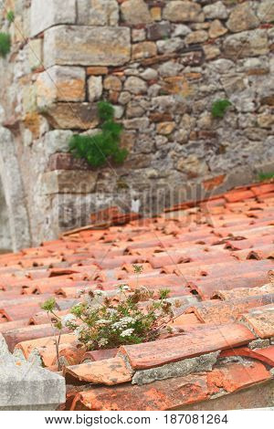 Grass on an old tile roof. A roof from an old red clay tile a close up small depth of sharpness