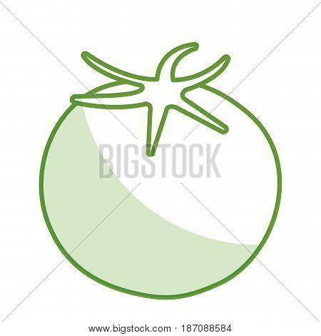 fresh tomate vegetable icon vector illustration design