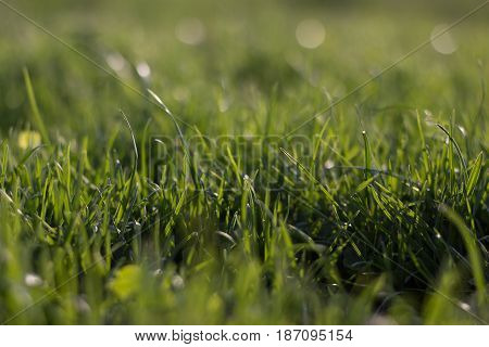 green grass on green background sunny evening
