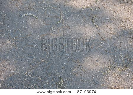 Asphalt texture with small poplar twigs and seeds. Grey background.