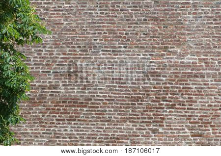Brickwall and a tree color image texture background