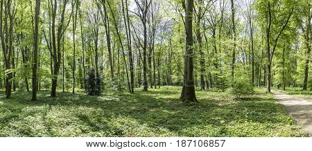 Forest In The Park Of Wilhelmsbad