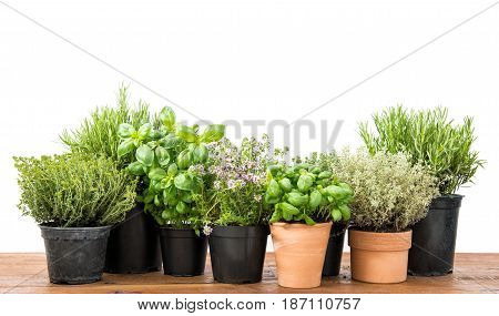 Fresh herbs on kitchen table. Basil rosemary thyme savory on white background