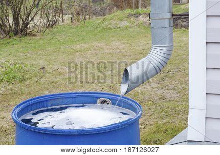 of a metal tube for draining the water flows rainwater in a plastic blue barrel on the background of green grass in a country house