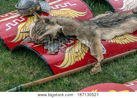 Type of Roman ancient weapon used in battles and fur from one wolf like symbol.