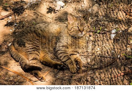 Beautiful alley cat camouflaged in the garden