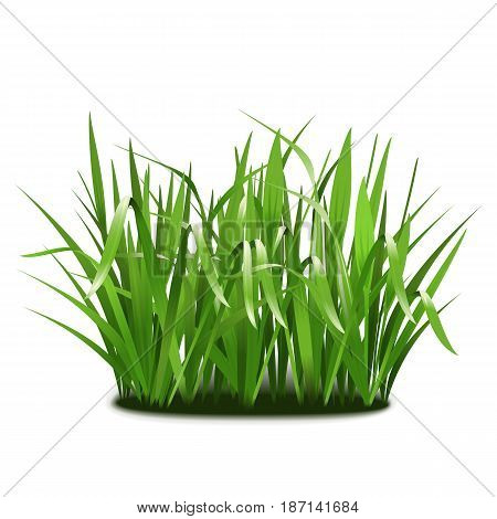 Vector Green Grass isolated on white background