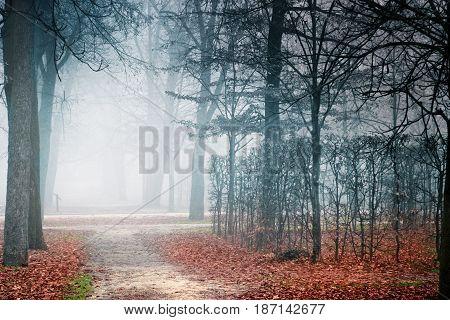 Mist In Empty Park