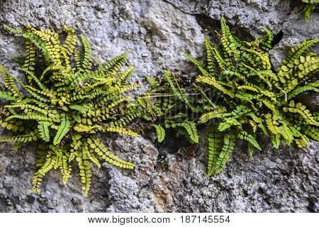 Fern On The Rock Background