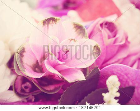Purple Curcuma Alismatifolia Known As Siam Tulip With Vintage Tone
