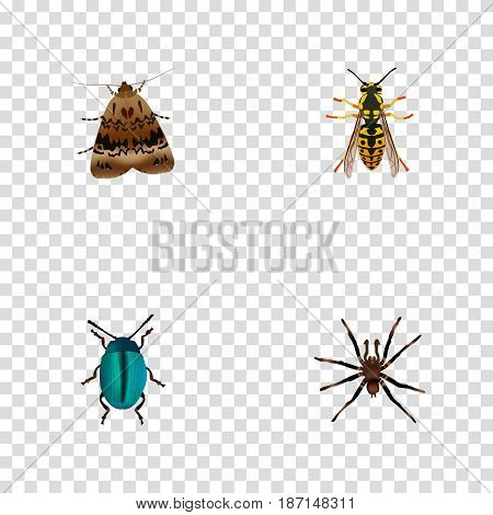 Realistic Butterfly, Bee, Bug And Other Vector Elements. Set Of Bug Realistic Symbols Also Includes Wisp, Bug, Butterfly Objects.