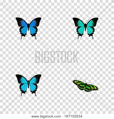 Realistic Copper, Papilio Ulysses, Green Peacock And Other Vector Elements. Set Of Beauty Realistic Symbols Also Includes Cypris, Bluewing, Green Objects.