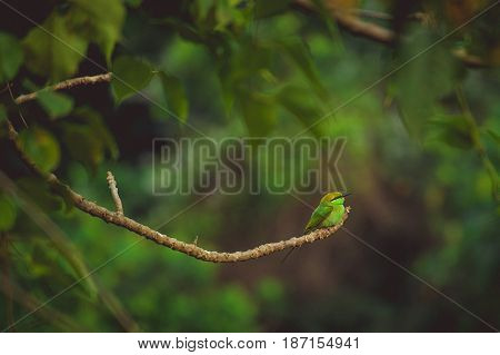 small green tropical bird sits on a branch