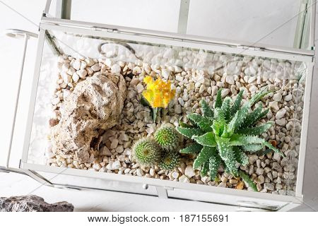 Closeup Of Cactus In A Glass Terrarium With Self Ecosystem