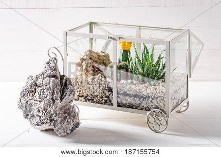 Small Terrarium With Cactus And Piece Of Desert
